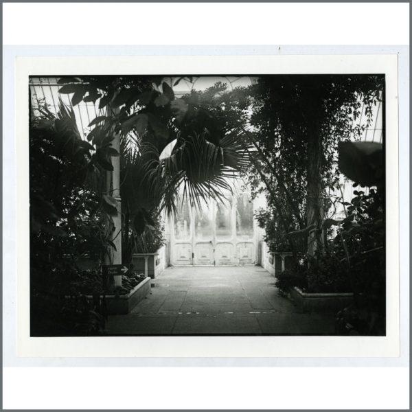B25709 - Linda McCartney Kew Royal Botanical Gardens Print (UK)